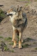 Nordhorn1402Jessi_Romulus-40