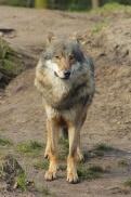 Nordhorn1402Jessi_Romulus-41