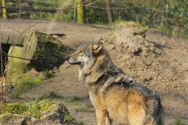Nordhorn1402Jessi_Romulus-43