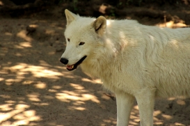 ZooBerlin1408LinaT_all-14