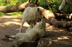 ZooBerlin1408LinaT_all-19