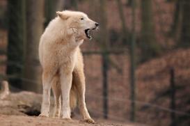 Zoo Eberswalde