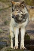 Pup10m16MuensterKati_Aragorn-06