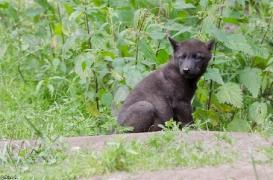 Pup1m13LueneburgBineG_black-01