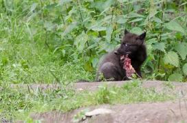 Pup1m13LueneburgBineG_black-05