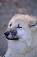 Pup6m12SpringeBineG_pup-10