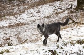 WolfScienceCenter1201Ria_Shima-05