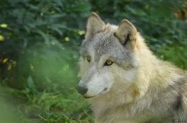 WolfScienceCenter1410Ria_Una-02