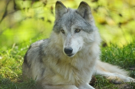 WolfScienceCenter1410Ria_Una-03