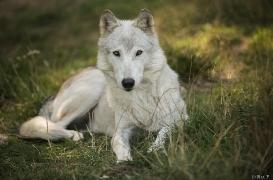 WolfScienceCenter1708Ria_Una-12