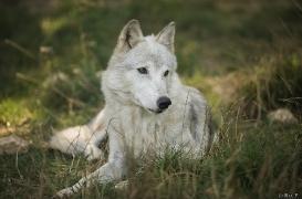 WolfScienceCenter1708Ria_Una-15