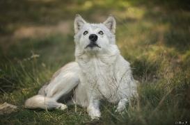 WolfScienceCenter1708Ria_Una-19