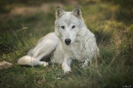 WolfScienceCenter1708Ria_Una-20