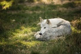WolfScienceCenter1708Ria_Una-25