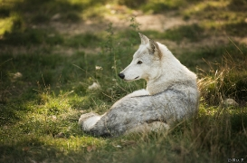 WolfScienceCenter1708Ria_Una-26