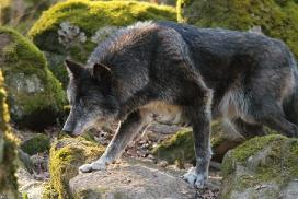 Wolfspark Kasselburg